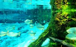 aquario6