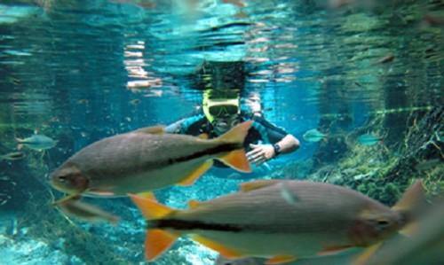 aquario_encantado_nobres_matogrosso1